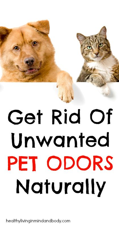get rid of unwanted pet odors naturally