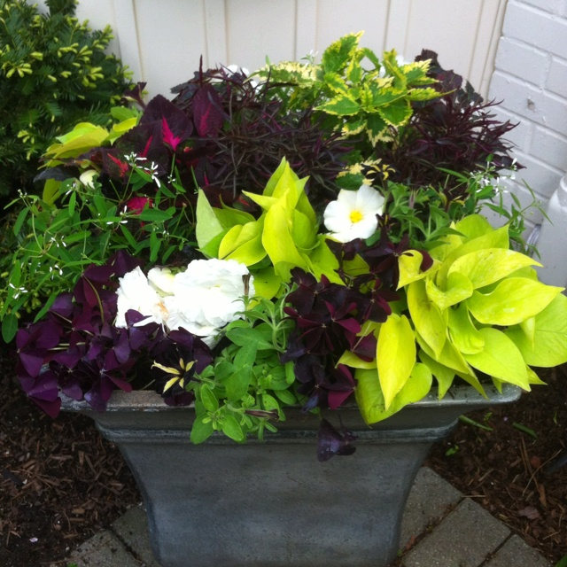 Shade container - Container gardens for shade ...