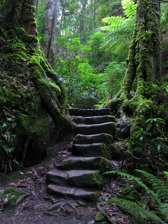 Where will this path lead??  Blue Mountains National Park, UNESCO, Australia
