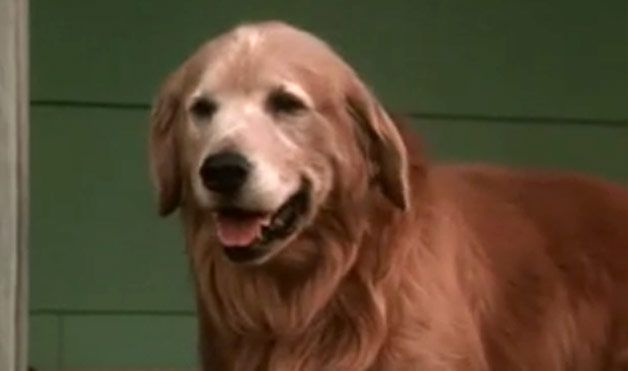 Dogs Names In Homeward Bound