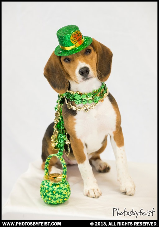 beagle st patrick's day flag