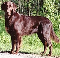 Dog Breeds | PEDIGREE | Dogs | Pinterest