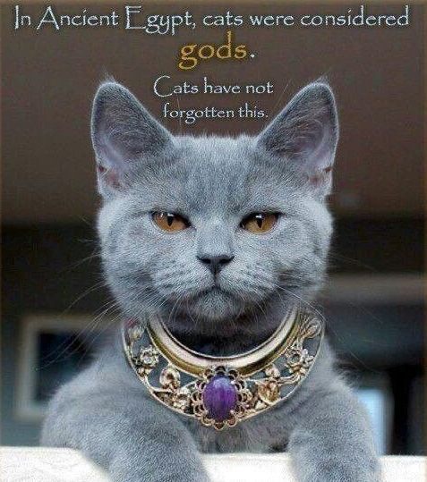 In ancient Egypt cats were gods-THEY have not forgotten this! I know mine have not! Lol!
