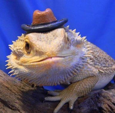 Reptiles make great starter pets! Animal humor Pinterest