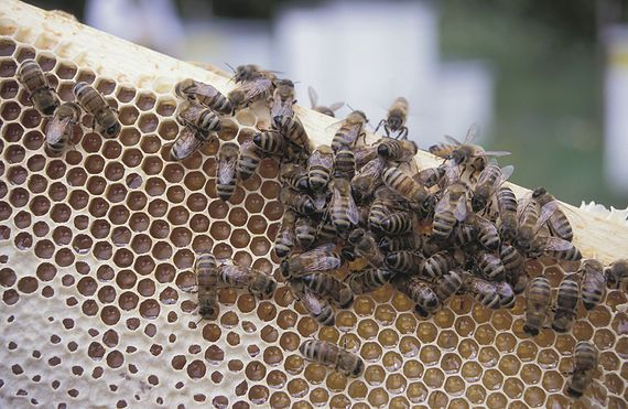guide to raising bees in your backyard from the old farmer 39 s almanac