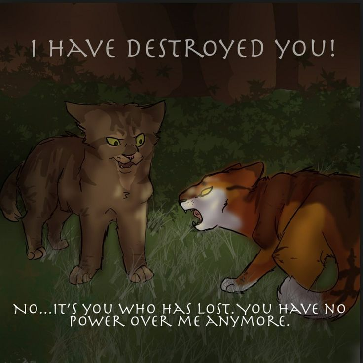 crookedstar and mapleshade warrior cats pinterest