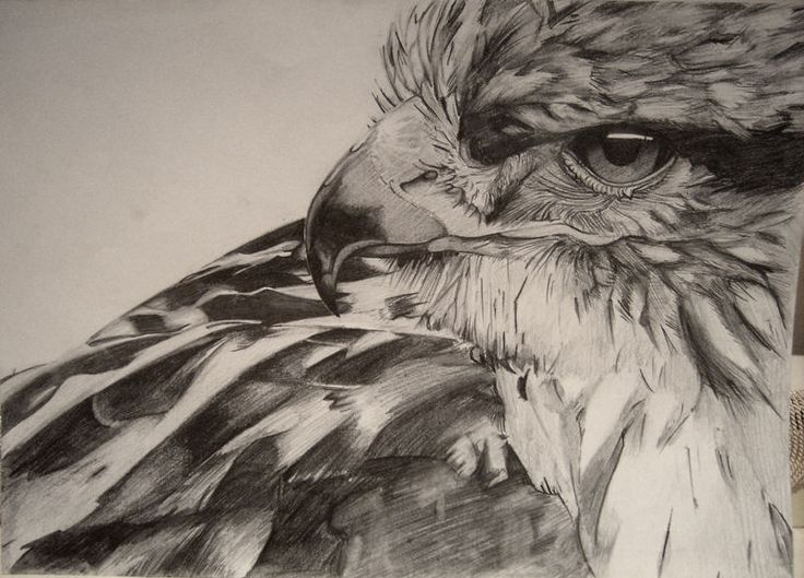 hawk pencil drawing art is for your heart pinterest
