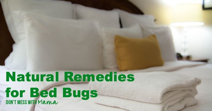 Image Result For Orkin Bed Bug Cost