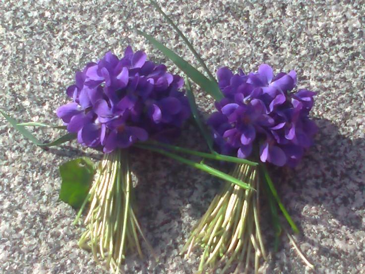 Avalske ljubicice... | Flowers | Pinterest Ljubicice