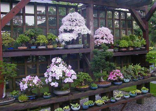 Backyard Bonsai Garden : Found on bonsaibarkcom