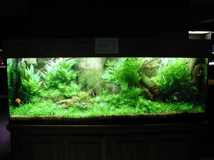 real plant tank aquariums and fish pinterest