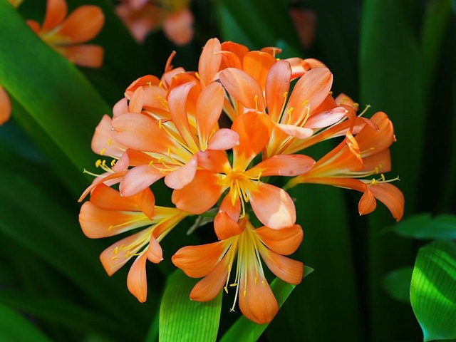 Backyard garden ideas - Orange Bulb Beautiful Flowers Amp Plants Pinterest