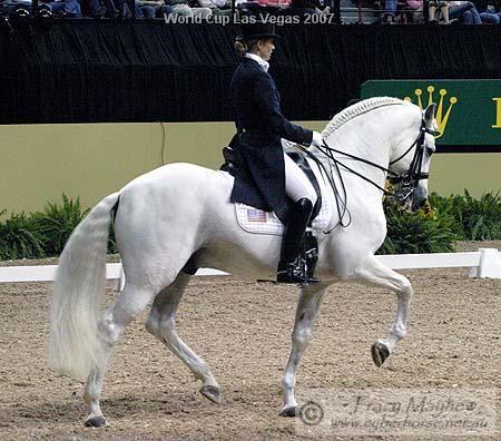 Spanish dressage horse