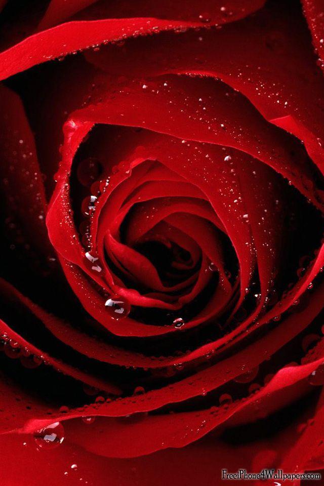 valentine's day newly single