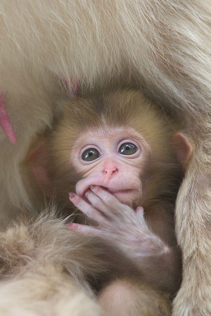 Cute monkey baby