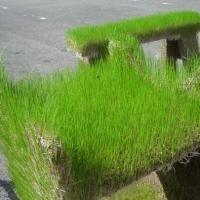 Jardim com Materiais Reciclados | Recicla e Decora