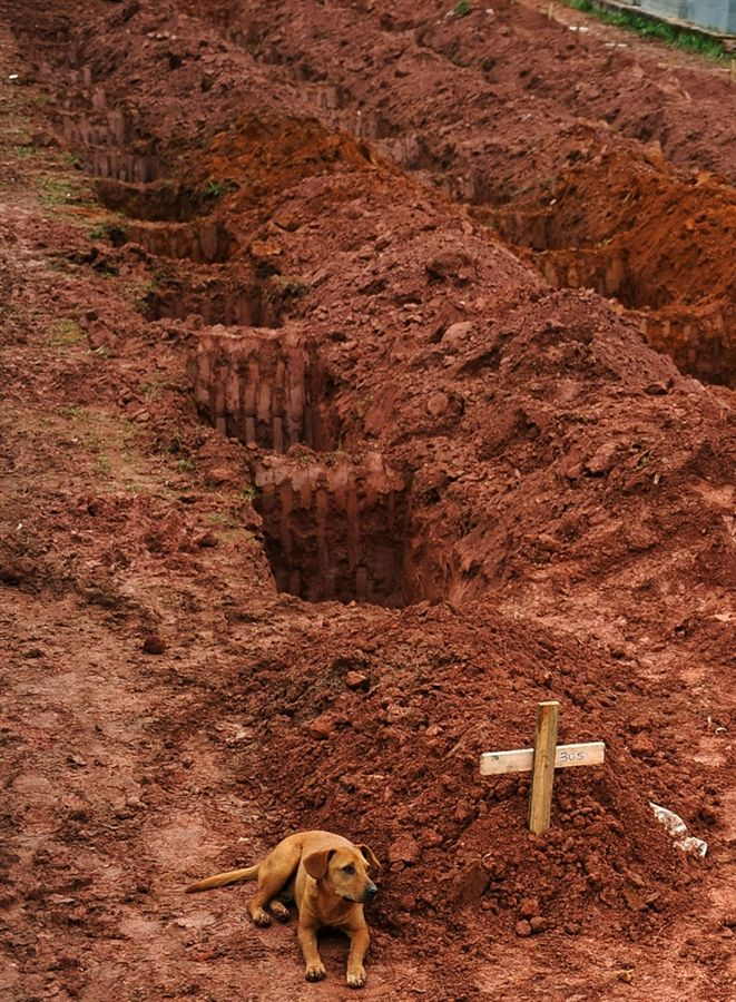 """A dog, """"Leao"""", sits for a second consecutive day, next to the grave of her owner, Cristina Maria Cesario Santana, who died in the week's catastrophic landslides in Brazil, at the cemetery in Teresopolis, near Rio de Janiero, on Jan. 15. Brazilians braced for more rain Saturday, fearing further landslides after walls of muddy water tore through towns and claimed some 550 lives in the country's worst flood disaster on record."""