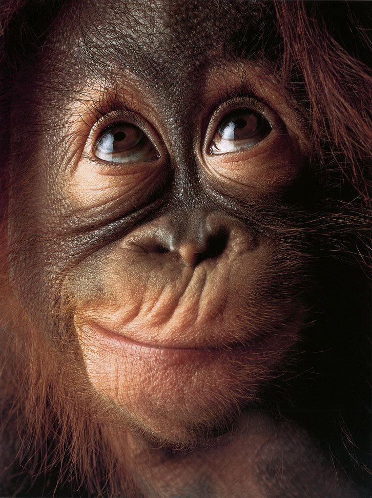 ~~Monkey Face by Tim Flach~~ | Pics that make me SMILE ...