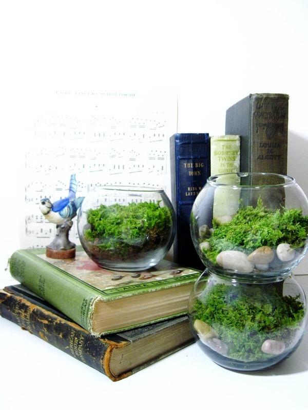 Live plant office terrarium mini indoor desk garden glass bowl live moss easy starter - Indoor desk plants ...