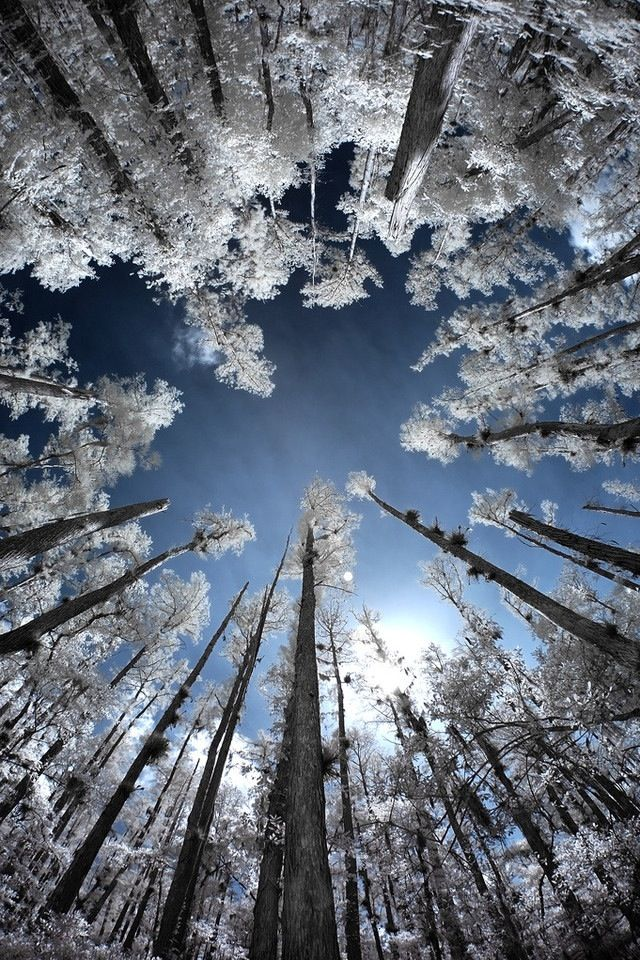 Look what you see when you look up! | Winter Wonderland ... Pictures Trees In Winter Pinterest
