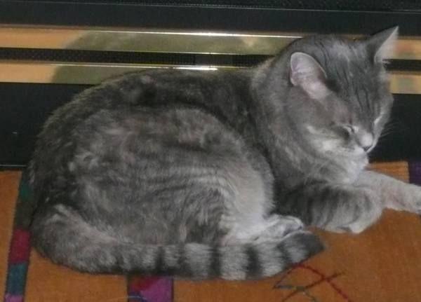 Craigslist Denver Co Pets ... area lost 9/13. http://denver.craigslist ...