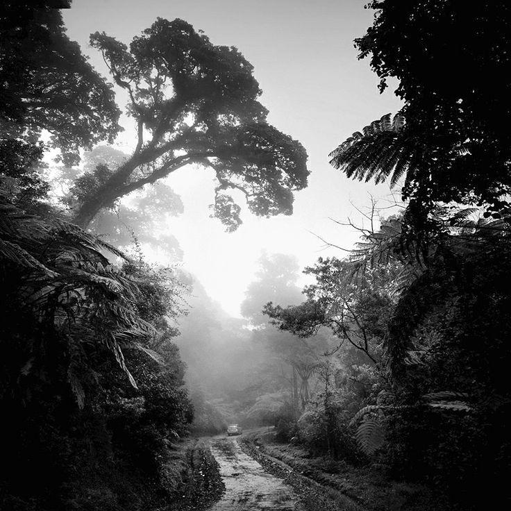 Hengki Koentjoro  Rain Forest, West Java, Indonesia