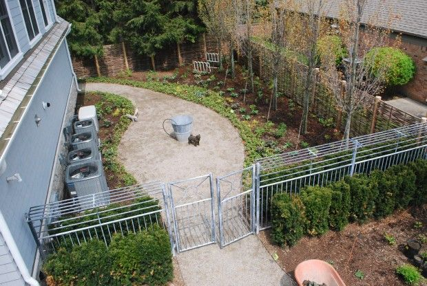 Dog Proof Backyard Ideas : The iron fence encloses the dog run, and is meant to deter coyotes