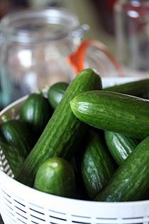 Arthur Schwartz's Homemade Kosher Dill Pickle | Recipe