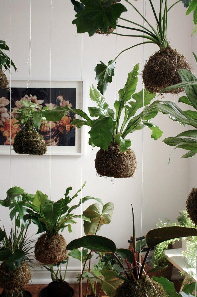 hanging kokedama plants
