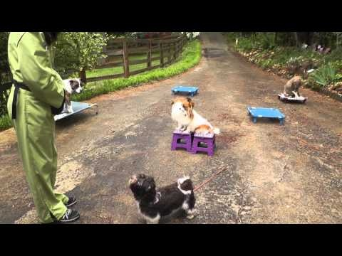... Dog Training: Teaching Puppy Command ... | Unleashed Dog Tra
