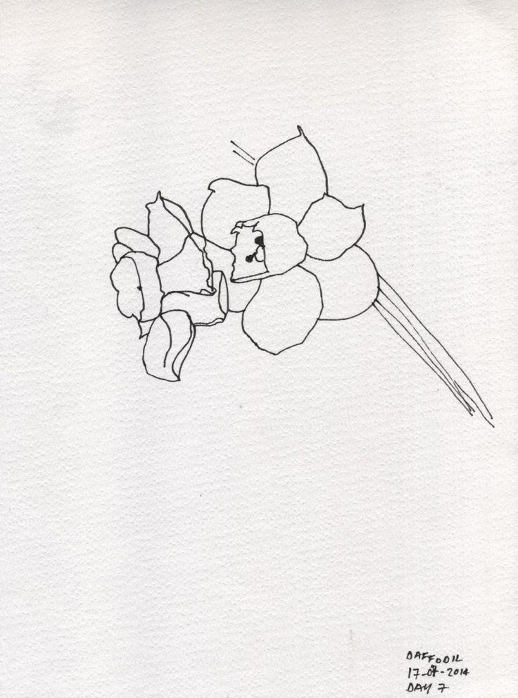 Line Drawing Daffodil : Daffodil line drawing marita green drawings