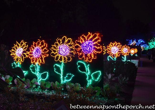 Atlanta Botanical Garden Lights Photograph Atlanta Botanic