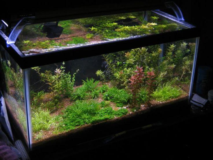 15 gallon long sewingalot my aquarium pinterest for 15 gallon fish tank