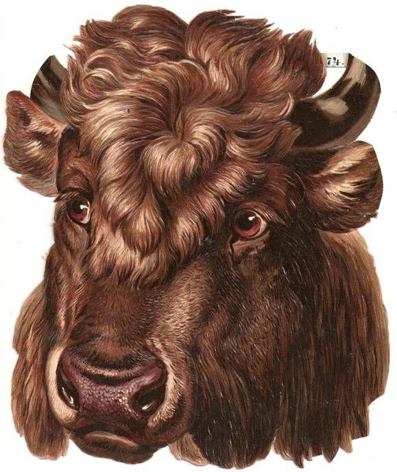 Victorian Die Cut Bull Horn Buffalo Scrap
