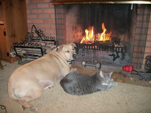craigslist dogs indianapolis
