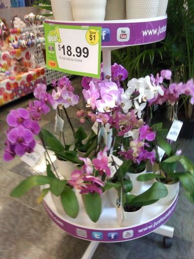 Grocery Store Wedding Flowers Pin By Kylie Compagna On Purple Wedding Flowers Pinterest