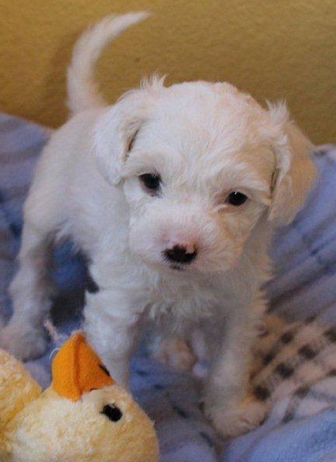 Dog And Puppy Rescue In Orange County Pinx Pets