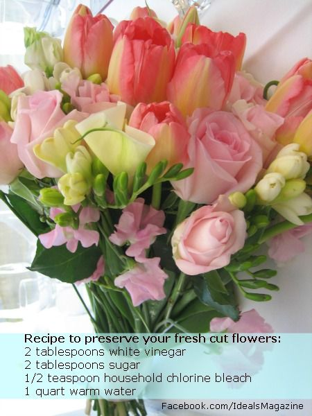flower preservative recipe handy household hints pinterest