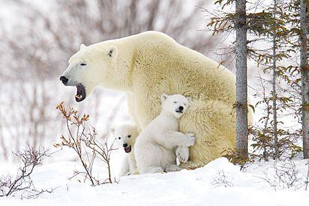 valentine's day polar bear stuffed animal