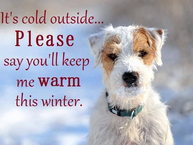 Keep me warm dog quotes and sayings pinterest - Keeping outdoor dog happy winter ...