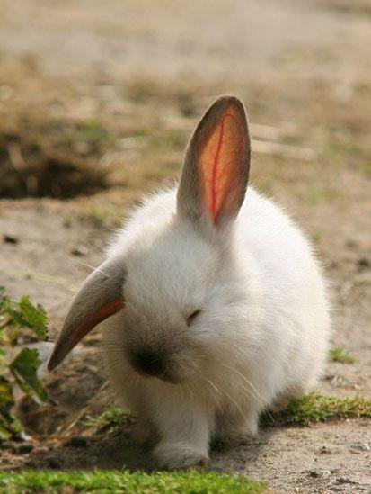 La cute little bunny