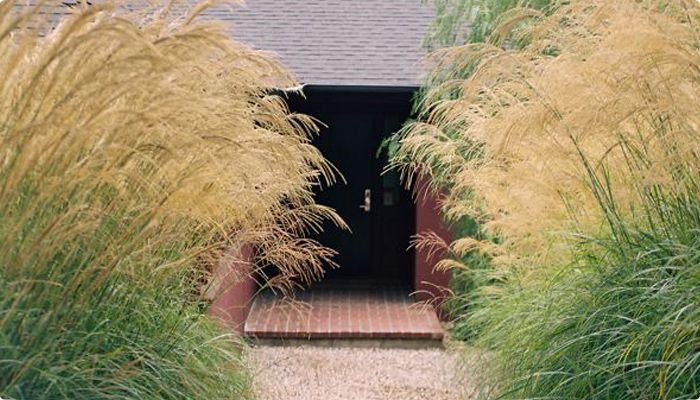 Pin pampas grass cortaderia selloana was planted in every for Landscaping ideas with pampas grass