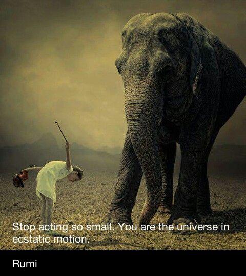 elephant motivational quotes quotesgram