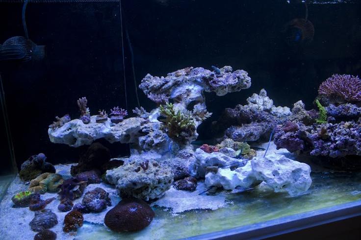 great rock scape Reef Aquarium Pinterest