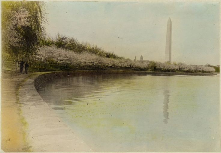 A hand-colored print of the Tidal Basin, with cherry blossoms, and the Washington Monument, Washington, D.C in 1920.