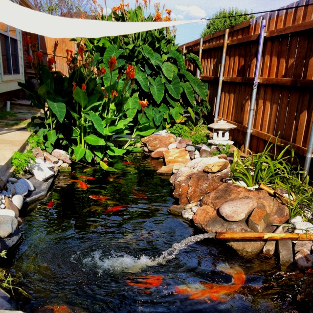 Koi pond with big plants and nice rocks gardening ideas for Koi fish pond rocks
