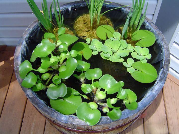 Fish Pond My 18th Pinterest