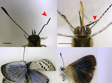 Fukushima mutant butterflies spark fear of effect on humans  Image from Scientific Report