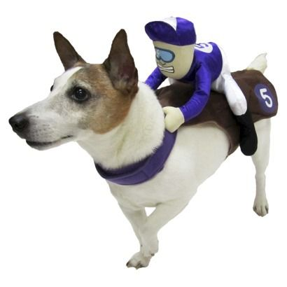 Jockey Dog Rider Pet Costume