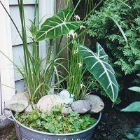 DIY: Galvanized wash tub to make a water garden!